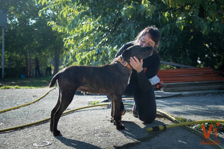 Acciones Voluntarios Itinerantes Protectora Animal Animals Sense Sostre