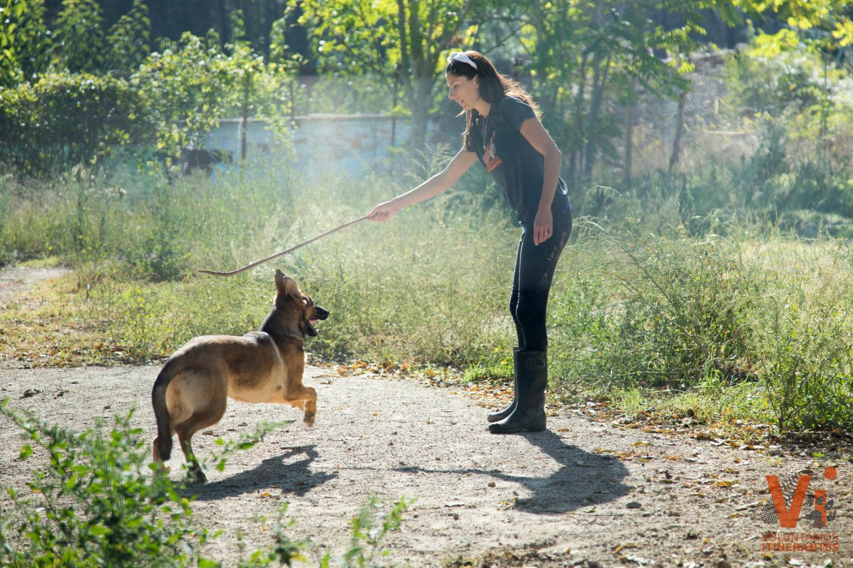 Acciones Animals Sense Sostre Refugio animal Voluntarios Itinerantes