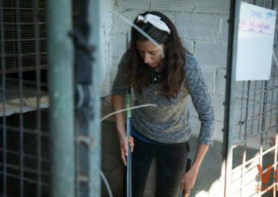Animals Sense Sostre Acciones Voluntarios Itinerantes