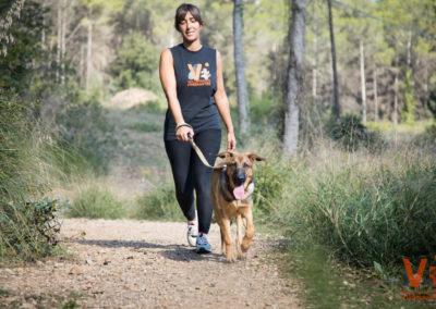 Adoptar Perro Gato Animals Sense Sostre Voluntarios