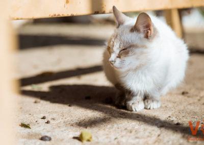 Gatito Segundas Oportunidades Protectora Animal VI