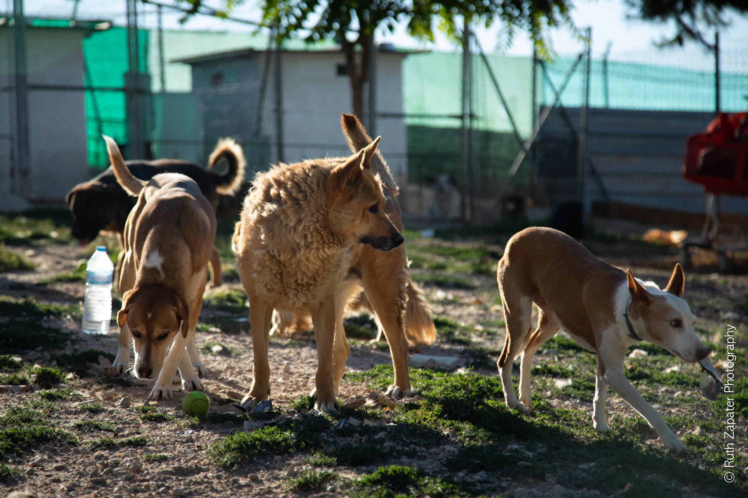 Protectoras Perros Voluntarios