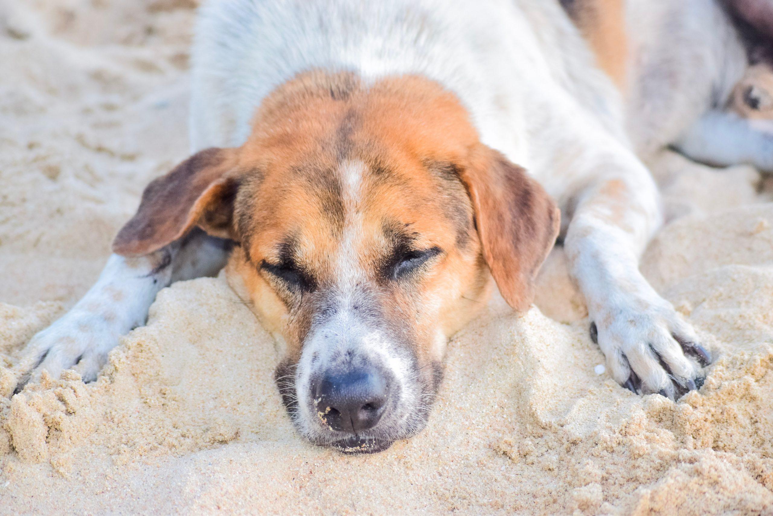 Banderas azules, playas sin perros