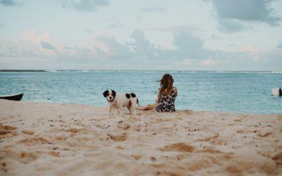 Playas sin perros, pero con bandera azul