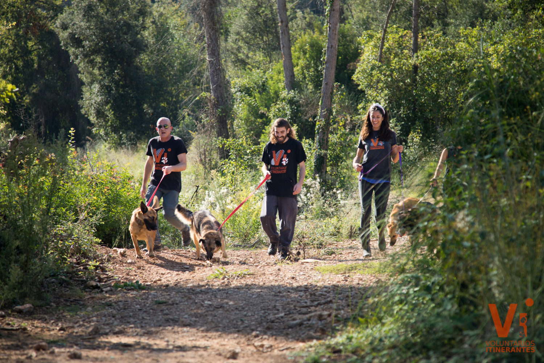 Voluntarios Itinerantes Protectora Animal Animals Sense Sostre