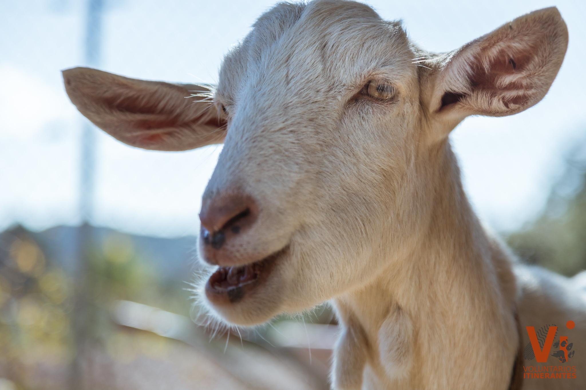 No son cosas. Código civil animales. Hulega de animales.